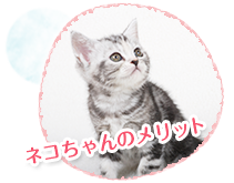 猫の避妊手術のメリット