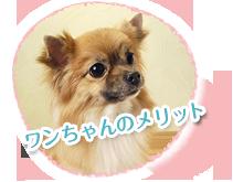 犬の去勢手術のメリット