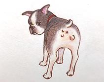 犬の避妊手術のメリット