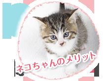 猫の去勢手術のメリット